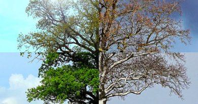 Střídání ročních období